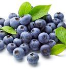 蓝莓提取物 25%原花青素 蓝莓粉 蓝莓提取物 花青素原料