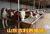 养殖场肉牛养殖场