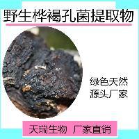 白桦茸浓缩粉  桦褐孔菌提取物