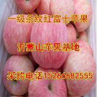 山东红富士苹果批发山东苹果便宜了