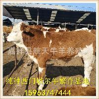 商洛肉牛犊市场批发价格多少