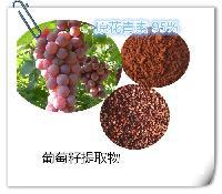 葡萄籽提取物 厂家现货直销葡萄籽粉OEM代加工